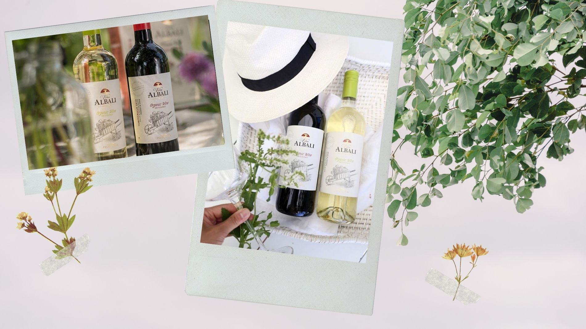 viña albali organics wines